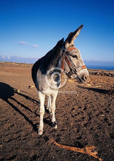 CD 021-Lanzarote