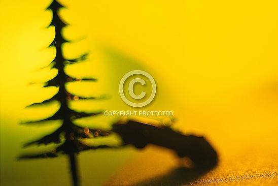 CD 015-Concepts 2