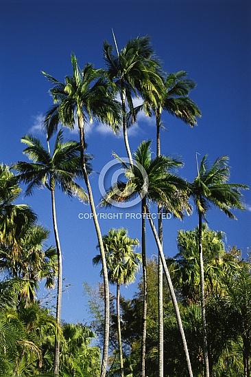 CD 004 Landscapes 1